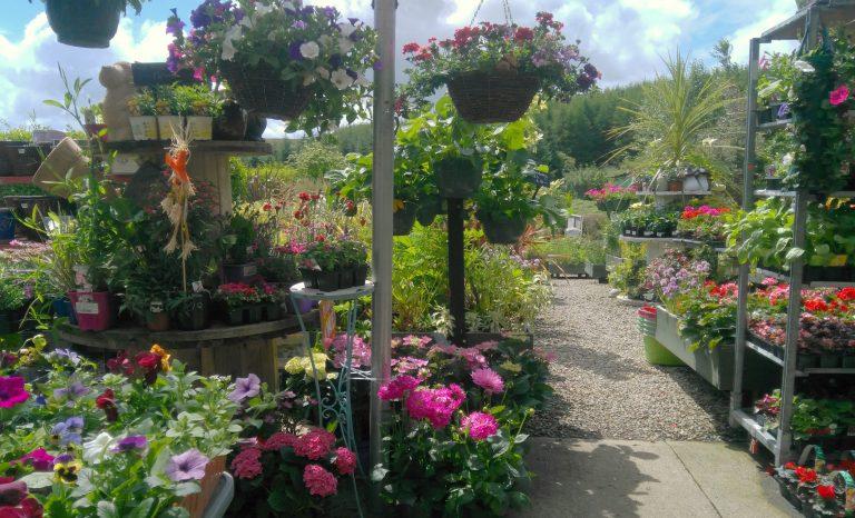 Summer in Cottage Garden Centre