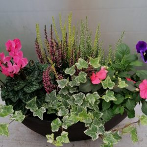 Oval Planter filed with seasonal colour
