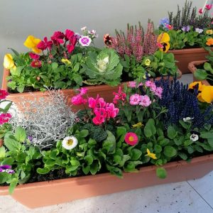 Colourful Teracotta Windowbox 60cm