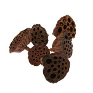 Dried Lotus Heads